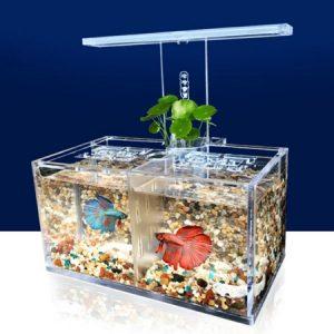 Cara Menyiapkan Aquarium Mini Untuk Kenyamanan Ikan Anda